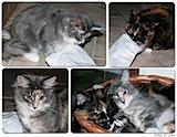 Katzen im (Weihnachts-)Glück